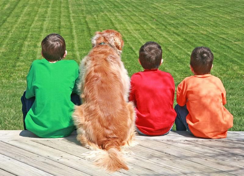 Schulhunde sind steuerlich absetzbar