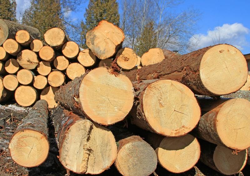 Unwetterschäden im Juli 2021: Land- und Forstwirtschaft